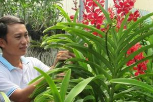 Đà Nẵng: Học tập Nghị quyết Đại hội VII Hội Nông dân Việt Nam