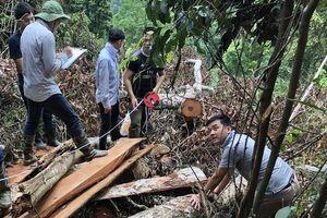 Bắc Cạn chỉ đạo xử lý nghiêm vụ phá rừng nghiến