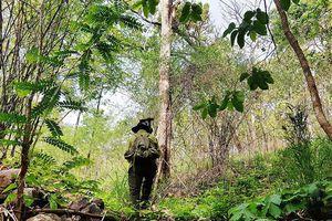Một cán bộ kiểm lâm bị mất tích nhiều ngày trong rừng