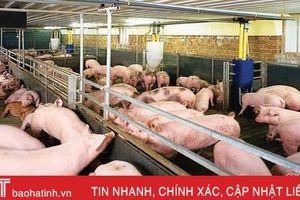 Giá lợn tại Hà Tĩnh tăng, người chăn nuôi chớp cơ hội xuất chuồng
