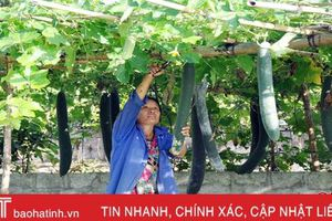 Hướng phát triển nông nghiệp hữu cơ tại Hà Tĩnh
