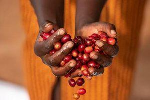 Câu chuyện rùng rợn đằng sau hạt càphê Hingakawa của phụ nữ Rwanda