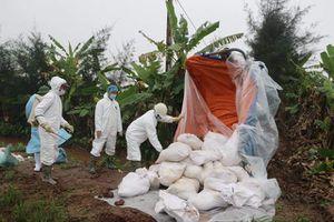 Ninh Bình: Trên 86 tỷ đổng hỗ trợ hộ chăn nuôi lợn bị nhiễm dịch