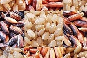 Gạo giá rẻ Trung Quốc ảnh hưởng đến xuất khẩu của các nước Đông Nam Á