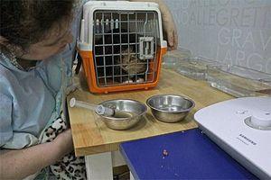Chuyện về những 'chuyên gia' giải cứu động vật đi lạc ở Hàn Quốc