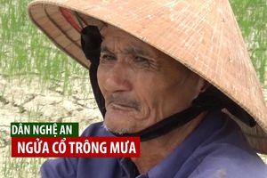 Dân Nghệ An ngửa cổ trông mưa giữa mùa hạn đồng khô, hồ cạn