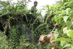 Tìm thấy thi thể bà cụ 80 tuổi sau 4 ngày mất tích trong rừng