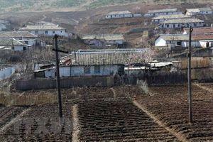 Việt Nam viện trợ nhân đạo cho Triều Tiên 5.000 tấn gạo cứu đói