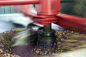 Clip: Cận cảnh quy trình ép nguội dầu olive theo kiểu truyền thống