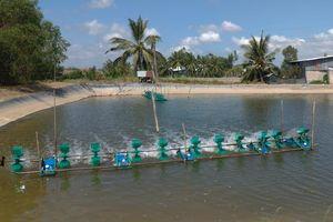 Bến Tre: Tăng cường kiểm soát tôm hùm nước ngọt trên địa bàn tỉnh