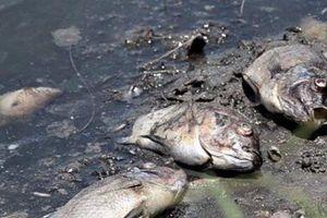 Quảng Ngãi: Cá chết nổi trắng mặt hồ Đồng Làng, dân hoang mang không rõ nguyên nhân