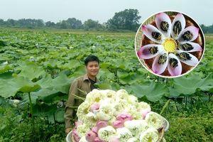 Đam mê trồng chè, ướp sen, chàng cử nhân báo chí rời thành phố về quê khởi nghiệp