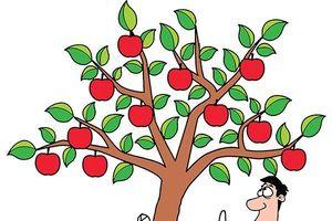 Văn hóa doanh nghiệp: Cấy nền bằng những giá trị từ hệ sinh thái
