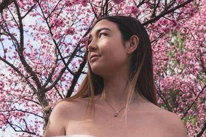 Tháng 8, đến Australia ngắm lễ hội hoa anh đào thần tiên đẹp kỳ ảo