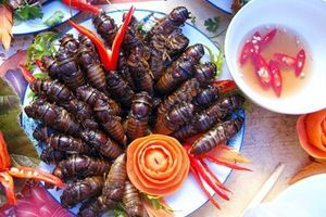 Khám phá các món ngon từ ve sầu, đặc sản hiếm có mùa hè