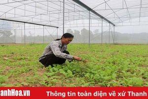 5 HTX nông nghiệp trên địa bàn huyện Thường Xuân tham gia liên kết bao tiêu sản phẩm
