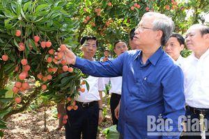 Tỉnh Bắc Giang cần đẩy mạnh phát triển vùng nông nghiệp trọng điểm