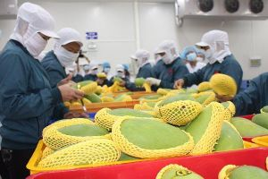 Kiến nghị thay đổi điều khoản để xóa 'độc quyền' chiếu xạ trái cây vào Mỹ