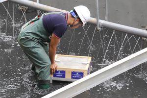 Clip: 'Bảo bối' xử lý bùn sông Tô Lịch thành khí CO2 và nước bằng công nghệ Nhật