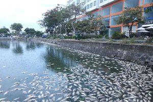 Vụ cá chết ở hồ ông Huỳnh Uy Dũng định 'giải cứu': Phát hiện rò nước thải