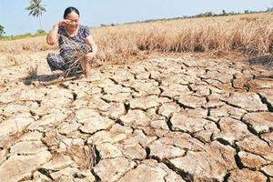 Việt Nam có trên 10 triệu ha đất đang có nguy cơ bị suy thoái