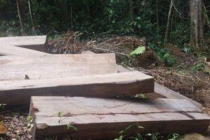 Gia Lai: Rừng Kbang vẫn 'chảy máu'