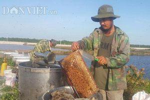 Ninh Bình: Luyện ong làm mật ngọt từ... biển mặn, thu 2-3 triệu/ngày