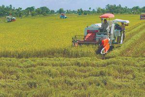 GS. Võ Tòng Xuân: Nghị quyết số 120/NQ-CP mở ra hy vọng lớn để kinh tế phát triển mạnh