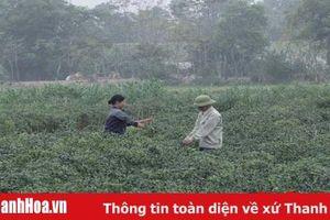Chất lượng, sát với đời sống người dân - mục tiêu sinh hoạt chi bộ của Đảng bộ huyện Thiệu Hóa