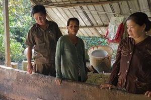 Sớm hỗ trợ người dân có đàn lợn tiêu hủy do dịch tả