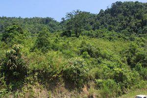 Yêu cầu kiểm tra sự việc nêu về dự án trồng rừng của InnovGreen