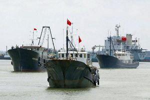 Tàu cá Trung Quốc đe dọa môi trường Biển Đông