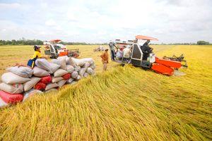 Đồng bằng sông Cửu Long nên sản xuất ít gạo hơn