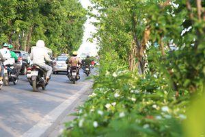 Có một con đường 'Singapore thu nhỏ' ngay giữa lòng Hà Nội
