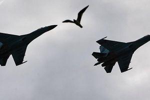 Xem tiêm kích Su-27 và Su-30 Nga khoe kỹ năng 'lượn lờ' cách mặt đất 100m