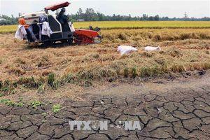Thừa Thiên - Huế đối phó với hạn mặn xâm nhập