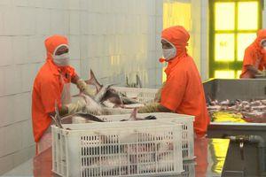 Triển vọng tăng xuất khẩu cá tra vào Trung Quốc