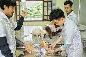 Cơ hội tìm kiếm việc làm luôn rộng mở với sinh viên thú y