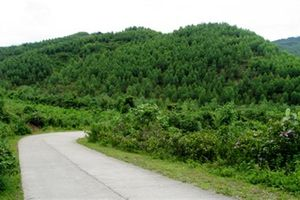 Dự án trồng rừng tại Nghệ An của InnovGreen đã thất bại