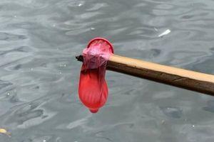 Hàng trăm bao cao su trôi ra kênh, khách sạn Thái Lan bị phạt