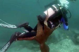 Thợ lặn thoát chết trước bạch tuộc khổng lồ giữa đại dương