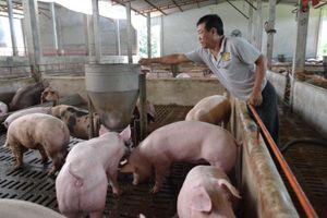 Sản lượng thịt lợn hơi xuất chuồng giảm 5%