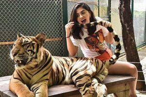Tới Thái Lan, ghé nơi hổ đi lại nhởn nhơ trước mặt du khách