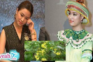 Hoàng Thùy Linh: 'Từ giờ ai đào bới chuyện quá khứ sẽ gửi lá ngón đến tận nhà'