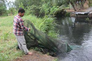 Bến Tre: Trang trại nuôi vịt xả thải ra kênh nội đồng gây ô nhiễm nguồn nước
