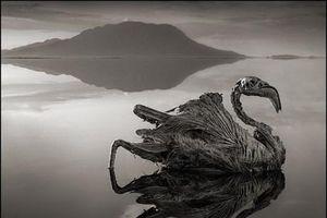 Hồ nước ma quái hóa đá động vật và bí ẩn đã được làm rõ