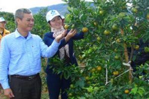 Quỹ Hỗ trợ nông dân biến khát vọng làm giàu thành hiện thực