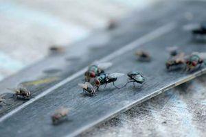Kinh dị ngôi làng bị xâm chiếm bởi cả 'quân đoàn' ruồi