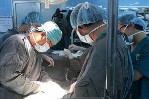 Bác sĩ cũng sốc: Dòi bò lúc nhúc trong khối bướu ung thư của bệnh nhân