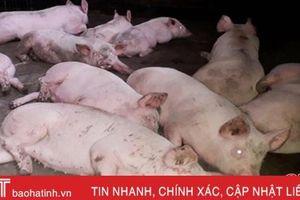 Huyện biên giới Hà Tĩnh xuất hiện dịch tả lợn châu Phi